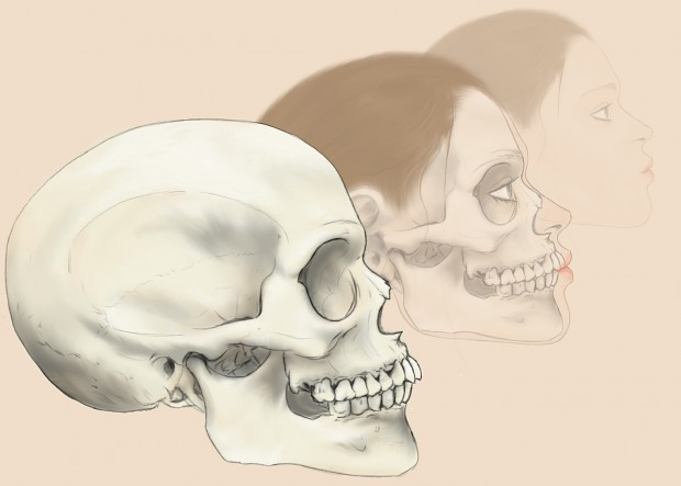 Digital Art: Skull