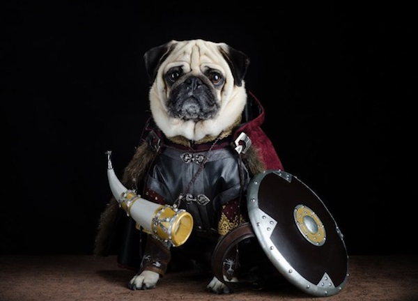 The dog of rohan