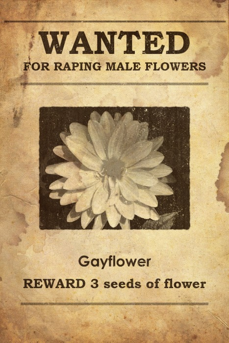 Gayflower Wanted