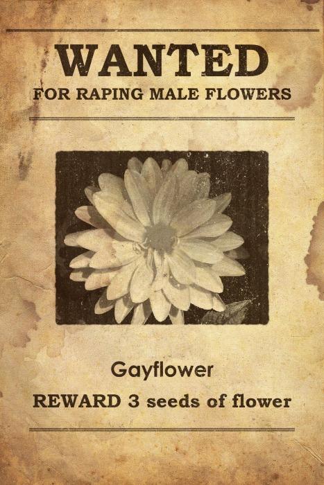Gayflower Wanted