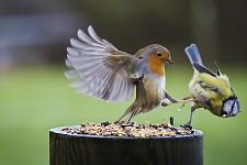 Bird didn't know that was sparta