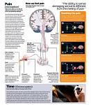 Neuroscience - pain