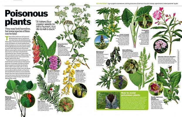 Some poisonous plants