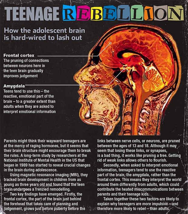 Teenage Rebellion - neuroscience