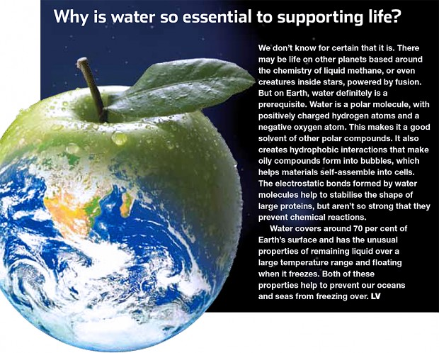 Why is water essential to life?