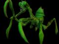 Vegetoids