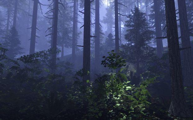 Petrograd Forest