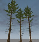 Spruce Trees wip01
