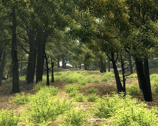 Bush Land