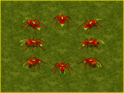 Colony Fire Ant