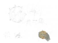 Pherapod concept