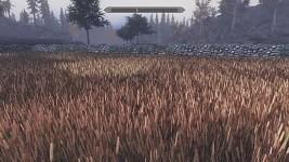 Any cornfield