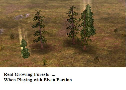 forests 1