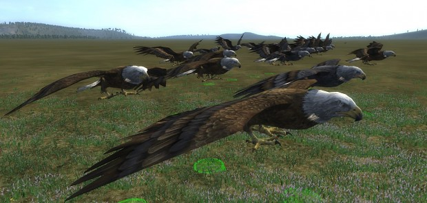 Eagles are coming!