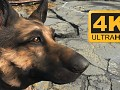 4K Dogmeat
