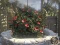 Less Vibrant Flowers Re-Texture