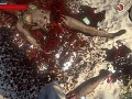 Bloody Dead Island