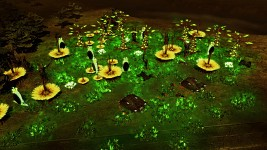 Green Tiberium Forest
