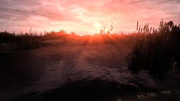 Swamp in the morning