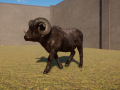 Melanistic Dall Sheep