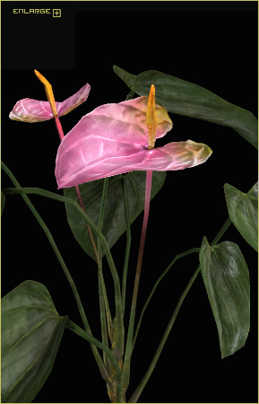 Anthurium flower model by Taurus