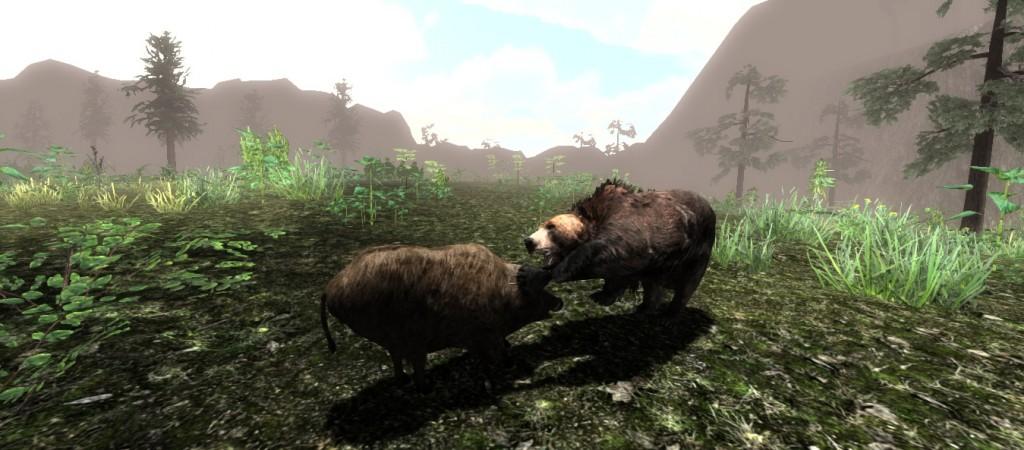 bear vs boar
