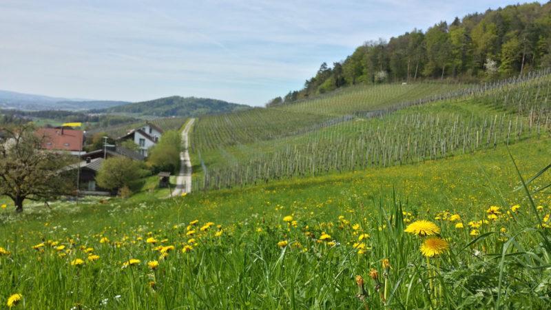 Switzerland's Pastoral Fields