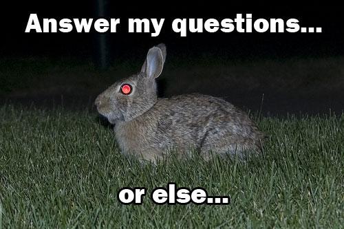 Bunny questions