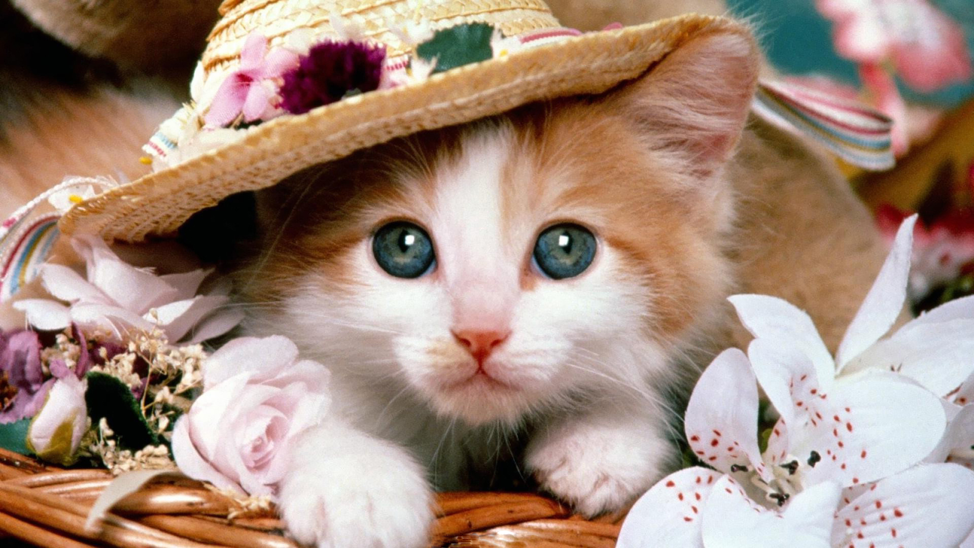 Cute cats file cat lovers mod db cute cats voltagebd Image collections