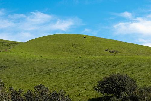 скачать бесплатно игру Hill - фото 11