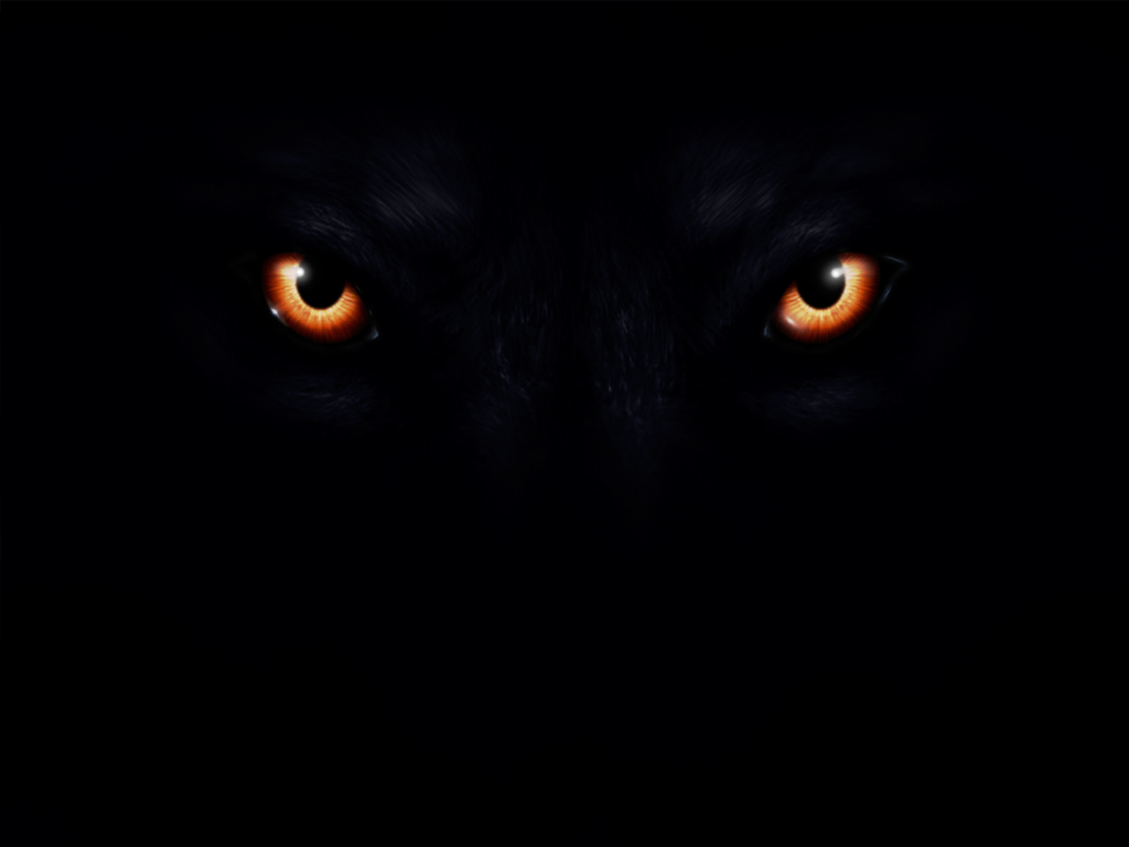 Glowing Yellow Wolf Eyes | www.imgkid.com - The Image Kid ...