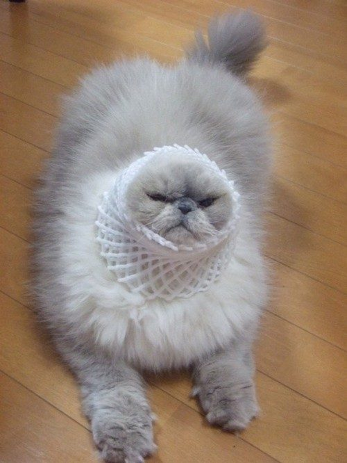 Funny cats image cat lovers mod db funny cats voltagebd Gallery