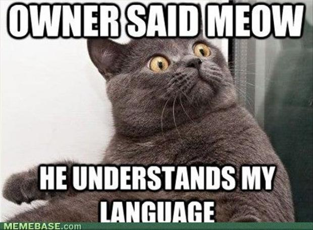Funny Memes For Lovers : Funny cats image cat lovers mod db