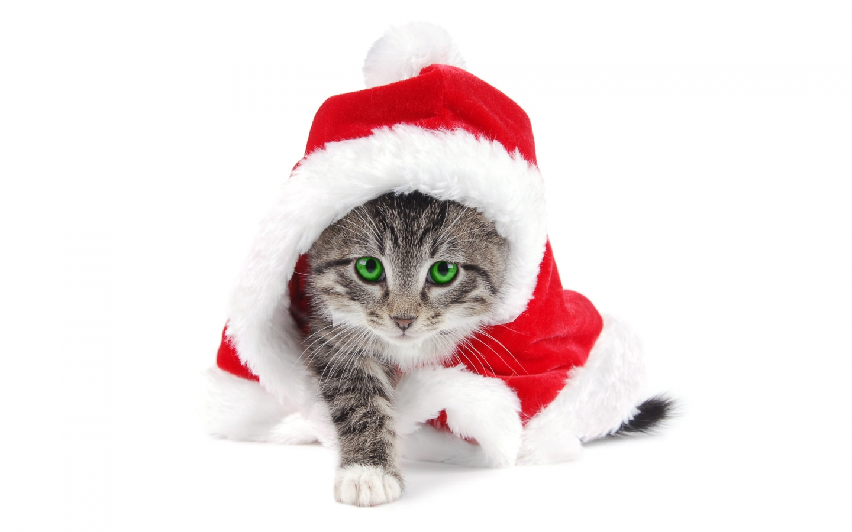 Christmas cat image Cat lovers Mod DB