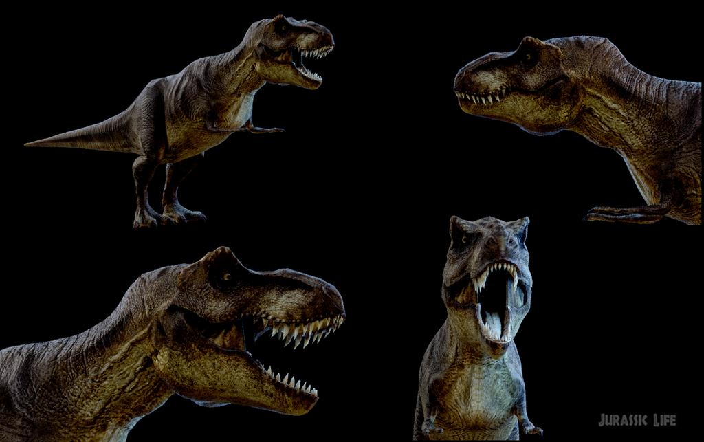 Rex update2019