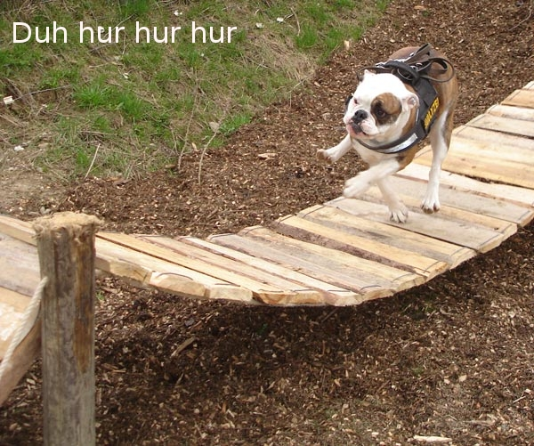 [Image: dumb_dog.jpg]