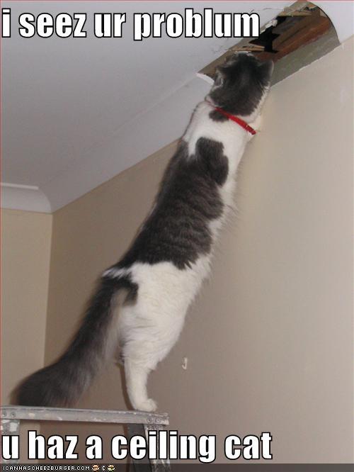 Ceiling Cat. embed & Ceiling Cat image - KiwiWarrior - Mod DB