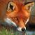 Fox_666