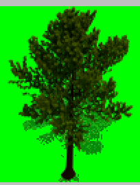 Placed Tree