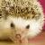 sniperhedgehog