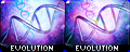 which evolutions
