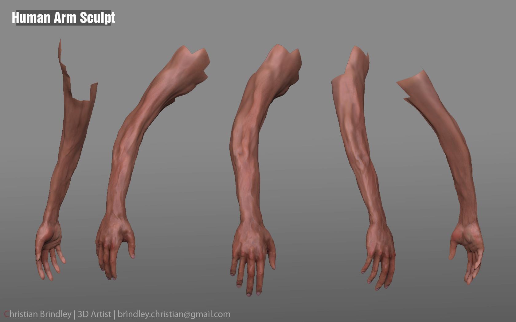 Human Arm Sculp... Human Arms