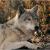 Luke_Wolf