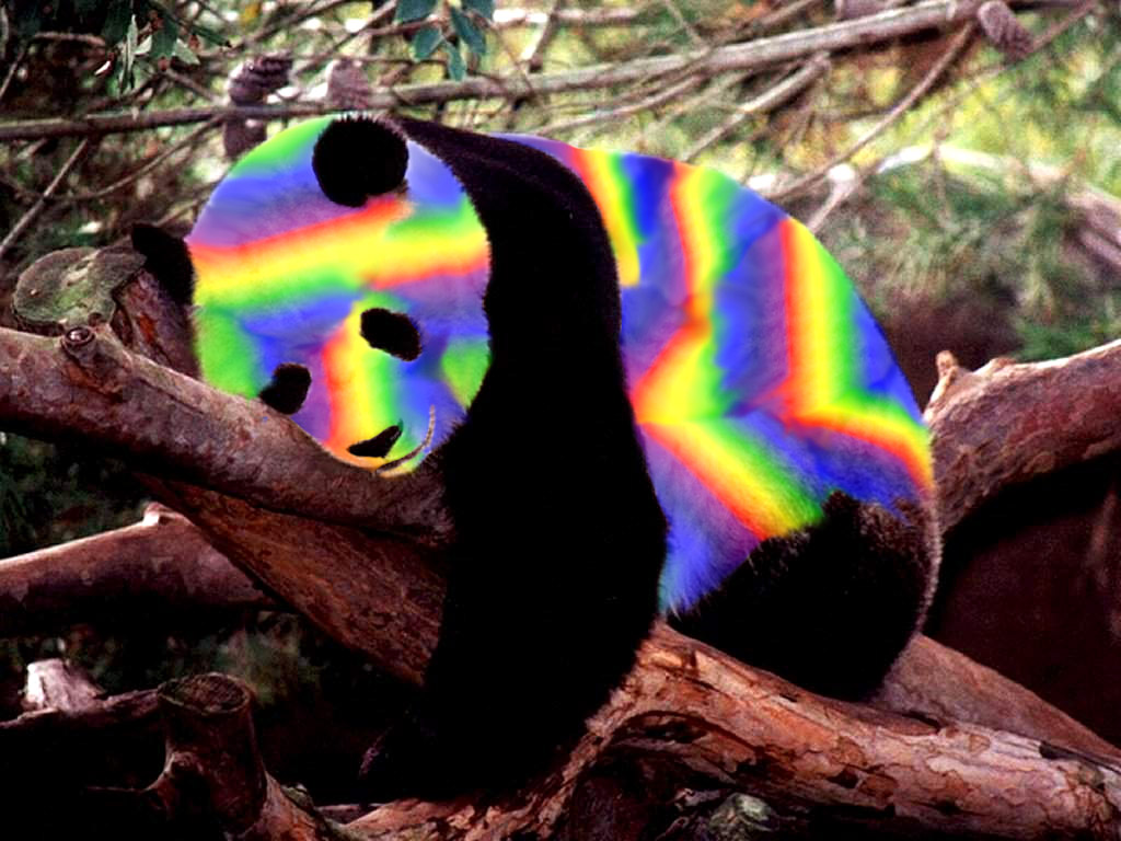 Rainbow Panda Related Keywords - Rainbow Panda Long Tail ...