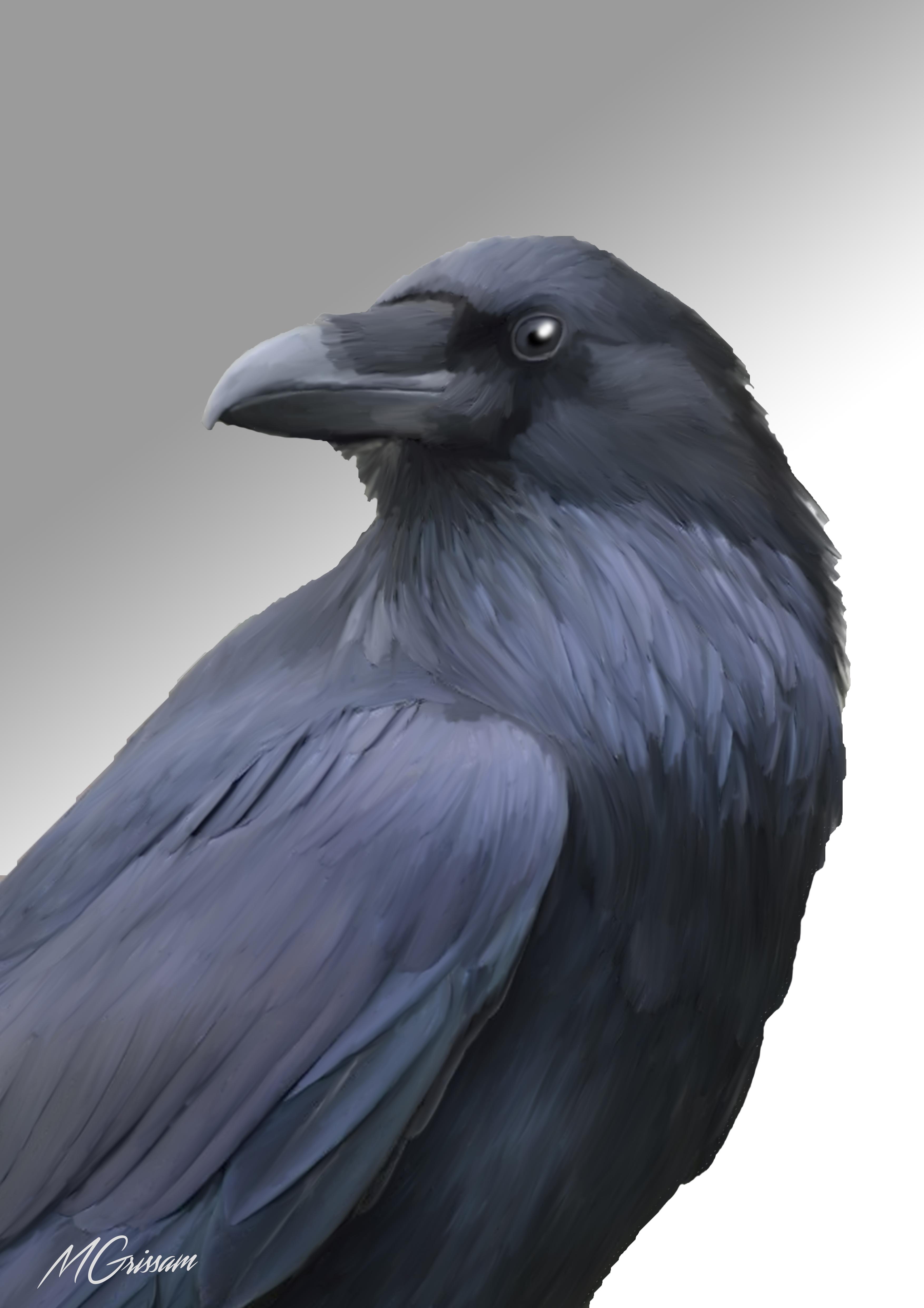 Ravy the Raven