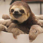 slothctopus