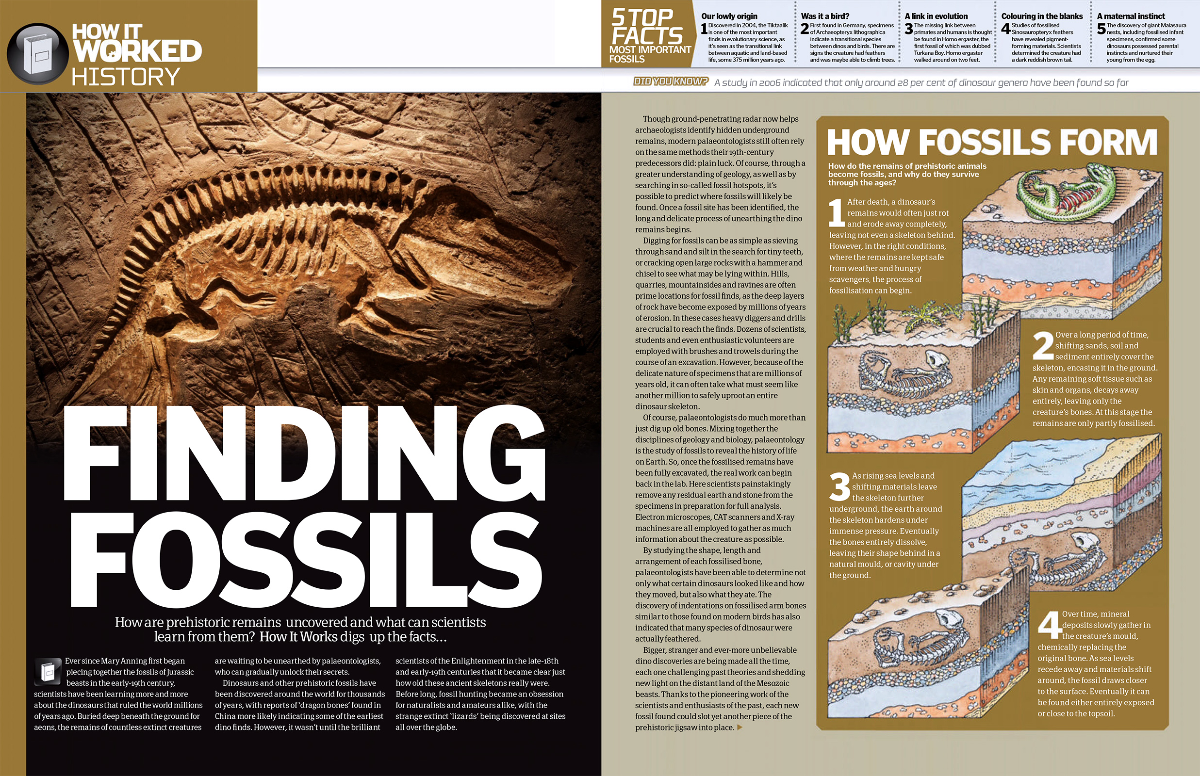 discovering fossils and its process