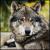 Deep_wolf