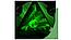 Crystal ModDB Logo v2 Icon