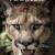 Puma_Xtreme